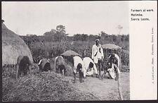 SIERRA LEONE c1905 postcard : Farmers at work, Matimba, unused..............7620