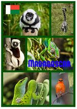 MADAGASCAR - SOUVENIR NOVELTY FRIDGE MAGNET - SIGHTS /  GIFTS / FLAGS / NEW