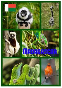 Madagascar - Souvenir Nouveauté Réfrigérateur Aimant - Sites / Gifts / Drapeaux