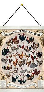 Volaille Du Monde Panneau Métallique Plaque avec Cordon Étain Signer 20 X 30 CM