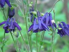 Cottage Garden Perennials & Biennials : Seeds : 17 Varieties