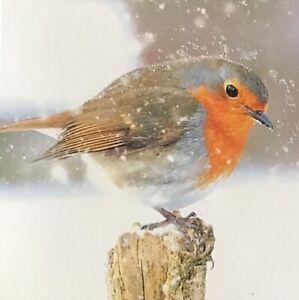 Beautiful Luxury Robin Christmas Card-Winter-Snow-Glitter-SINGLE CARD-Dark Room