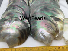 AA+ quality,Tahitian Black Mother of Pearl,One PCS,Oyster, tahitian pearl