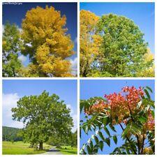20Pc Ash Tree Fraxinus Rare 5 Kinds Beautiful Decorative Perennial Plants Bonsai