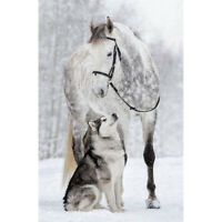 5D DIY Full Drill Diamond Painting Horse Wolf Cross Stitch Embroidery Craft #JT1