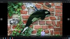 More details for killer whale hand made in mild and stainless steel, wall hanging