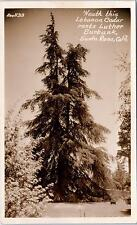 RPPC SANTA ROSA, CA California  Lebanon Cedar Tree LUTHER BURBANK c40s Zan