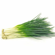 NEW 2000pcs Organic Chives Shallot Seeds Garden Green Onion Vegetable Plant