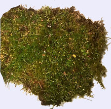 Live Forest Floor Moss Holds Moisture-Great For Planted Habitats and Enclosures