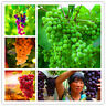 50 Grapes Bush Seeds Mixed Vine Vitis Vinifera Delicious Fresh Fruit Garden