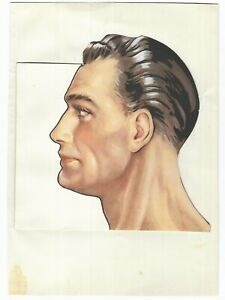 Vintage Medical Male Head Sectional Layered Anatomy Card Model Educational