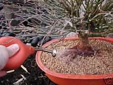 Ballbrause Gießball terra 250 ml kurz 9,5 cm Bonsai Kakteen Orchideen Sämlinge
