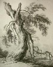 "FRANZ GABET (GAWET) ""KNORRIGER BAUM AM WASSER"" NACH WEIROTTER (?), (WIEN), ~1793"