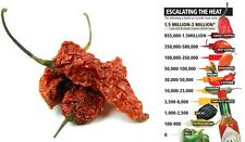 10g dried ghost pod  / bhut jolokia the hottest pepper in the world chili