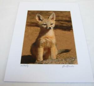 Kit Fox Pup Joshua Tree CA 8x10 Photograph signed Brian Blackwelder - #63