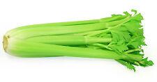 Celery Seeds - COMMAND -  Natural Healer -  MEDICINAL BENEFITS - 100 Seeds