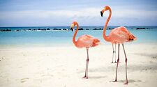 """Pink Flamingo Birds on the Beach - 42"""" x 24"""" LARGE WALL POSTER PRINT NEW."""