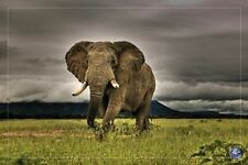 AFRICAN MAJESTY - ELEPHANT POSTER 24x36 - NATURE SCENIC 880