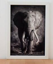 ELEFANT Druck schwarz / weiß  im weißen Holzrahmen - Bild Dekoration Elephant
