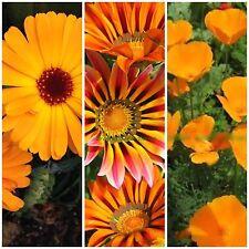 Kombi-Paket 3 orangene Blumensamen Mohn Ringelblume Gazanie