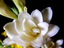 Fleur Carnale Perfume Oil Rollon Upscale Tuberose Orange Blossom Coconut Musk