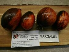 Gargamel Tomato - 5+ seeds - Heirloom Vegetable Seed!