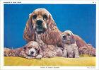 ANNÉES 60s CHROMO TRÉS GRAND FORMAT English Cocker Spaniel anglais DOG
