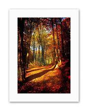 AUTUMN FOREST SUN ORANGE PHOTO Poster Picture Canvas art Prints