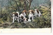 DA53.Vintage Tucks Postcard.Dog. Puppies. One of us is missing.