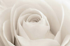 STUNNING ROSE FLOWER CANVAS #780 QUALITY FLORAL CANVAS PICTURE WALL ART A1