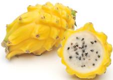 Pack of 300 +- HYLOCEREUS MEGALANTHUS fresh SEEDS PITAYA PITAHAYA DRAGON FRUIT