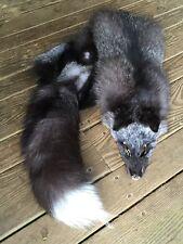 JUMBO WILD SILVER FOX Tanned Pelt Skin Taxidermy fur craft Log Cabin Decor