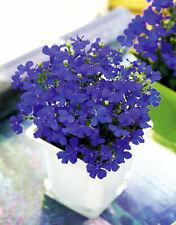 Seeds Lobelia Blue Сascade Flower Annual Indoor Garden Organic Heirloom Ukraine
