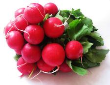 Garden Radish Seed 50 Seeds Raphanus Sativus Cherry Radish Vegetable Seeds C018