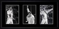 Freddie Mercury Framed Photographs PB0266
