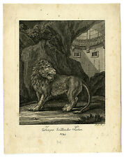 Antique Print-LION-BRULLENDER LOWE-Ridinger-1728