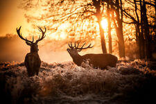 Stag Deer Sunset Autumn Forest Canvas Wall Art Animal Picture Print