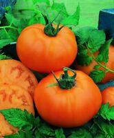 Tomato Seeds Tomato Chef's Choice Orange tomato F1 Hybrid 50 Seeds
