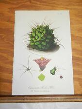 1859 Antique Floral COLOR Print//ECHINOCACTUS BUEKII