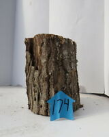 Unique Forest Product, Hollow Log for decoration/terrarium and crafts, #174