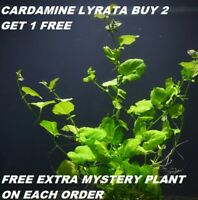Cardamine LyrataBunch Live Aquarium Plants Japan Dwarf Pennywort BUY2GET1FREE