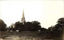 Brayton Church, Selby. Cattle.