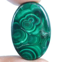 Cts. 27.75 Natural Orbicular Malachite Cabochon Oval Cab Loose Gemstone