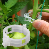 50/100Pcs Clear Hanging Plastic Vegetables Plant Vine Clips Clamp Tool Novelty