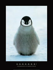 PENGUIN BRRRR POSTER BY KONRAD WOTHE cute baby animal snow South Pole art print