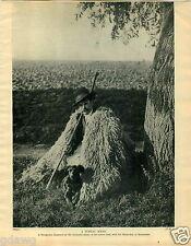 1930 Book Plate Dog Print Komondor Shepherd Hungarian Puli Sheepdog