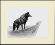 SCHIPPERKE BEAUTIFUL LITTLE DOG PRINT DOG ON  A BOAT MOUNTED READY TO FRAME