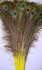 "100 Pcs DYED PEACOCK Feathers 35-40"" YELLOW; Crafts/Art/Dress/Bridal/Costume"