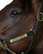 5x7 Color photo American Pharoah   5 to choose from