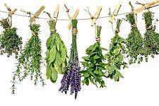25 Baneful Herbs Lot:trumpet,hemlock,belladonna,datura,wolfsbane,nightshade